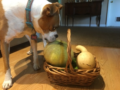 Stella reviewing her harvest.